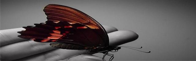 papillon-640x200